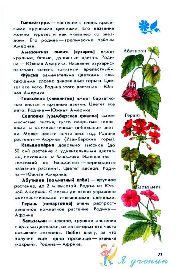 Купить саженцы голубики в Москве, купить садовую