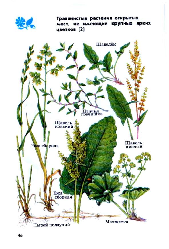 травянистые растения фото