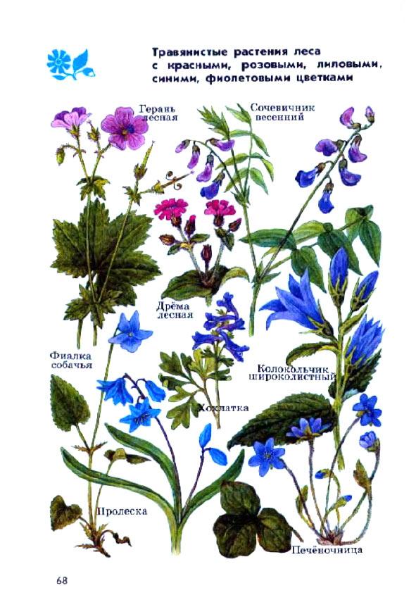Растения леса с рисунками