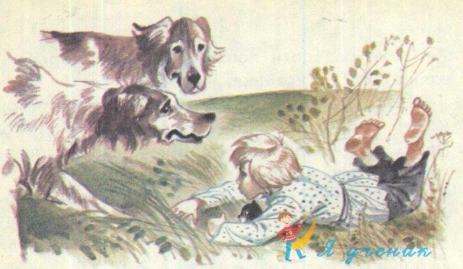 котенок и собаки
